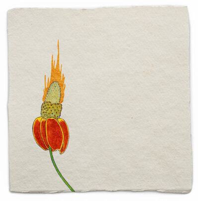Barbara Schreiber, 'Fire Diary (Prairie Coneflower)', 2019