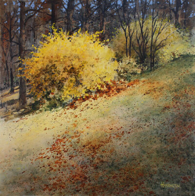 Charles Harrington, 'Forsythia'