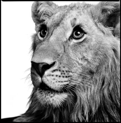 Patrick Demarchelier, 'Lion', 1997