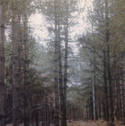 Kate Sherman, 'Forest 2', 2018