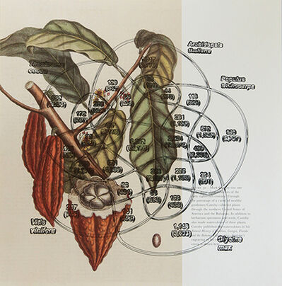 Pedro Neves Marques, 'Cocoa plant (Mark Catesby: 1754) + Shared gene family of cocoa (2010)', 2017