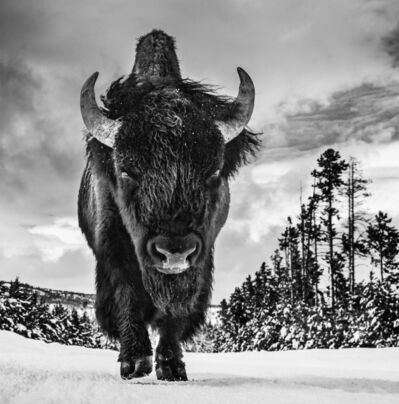 David Yarrow, 'The American Idol ', 2017