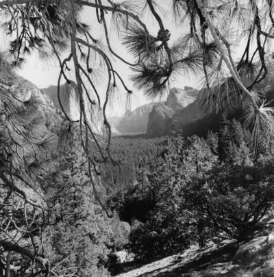 Lee Friedlander, 'Yosemite', 2004