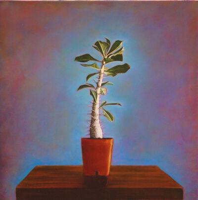 Kate Breakey, 'Cactus Portfolio, Volume II', 2007