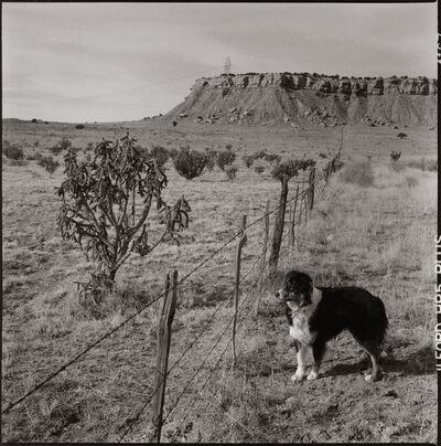 Danny Lyon, 'Trip, Mesa San Luis, New Mexico', 2016