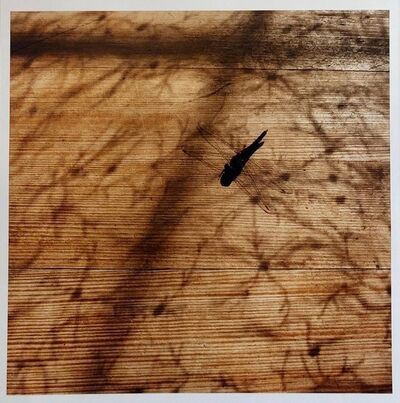 Peter C. Jones, 'Dragonfly, Large Format Photo 24X20 Color Photograph Beach House', 2000-2009