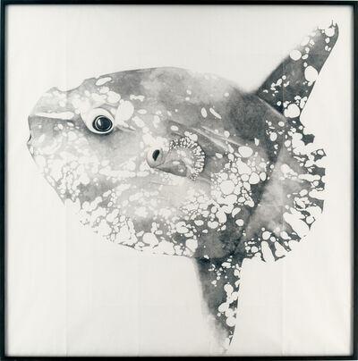 Michael Müller, 'Mola Mola', 2003-2004