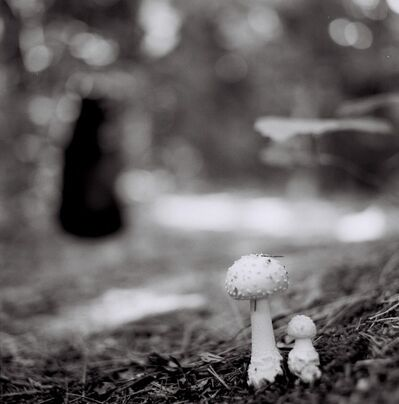 Heather Boose Weiss, 'Mushroom Study', 2011