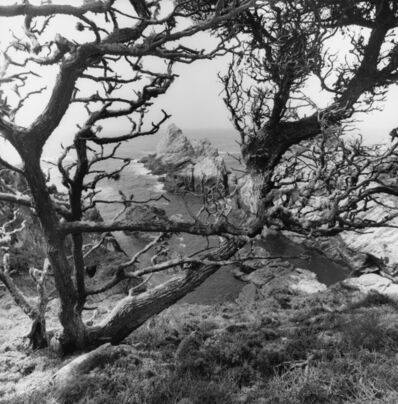 Lee Friedlander, 'Point Lobos', 2012