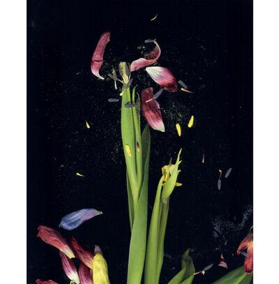 Mat Collishaw, 'Tulipmania', 2017
