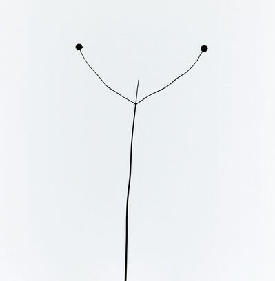Harry Callahan, 'Weed Against Sky, Detroit ', 1948