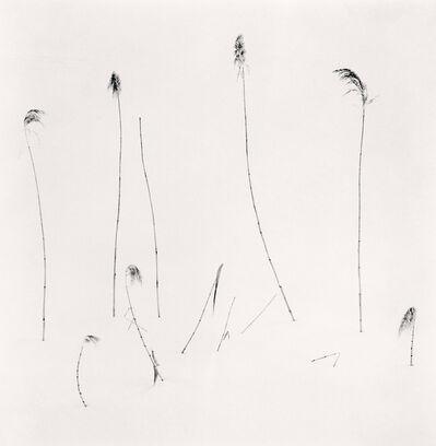 Michael Kenna, 'Twelve Winter Stalks, Furano, Hokkaido, Japan', 2012