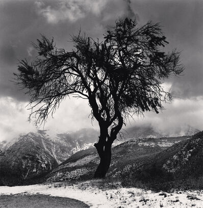 Michael Kenna, 'Almond Tree and Mountains, Cansano, Abruzzo, Italy', 2016