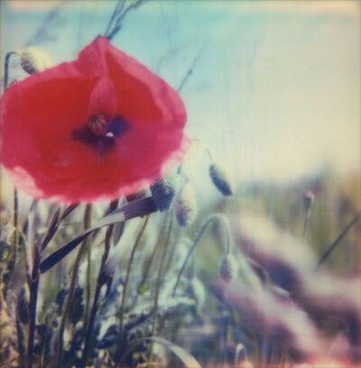 Carmen de Vos, '03 | Poppy Realm', 2018