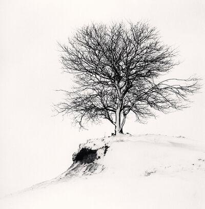 Michael Kenna, 'Hill Edge Tree, Shibecha, Hokkaido, Japan', 2007
