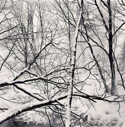 Michael Kenna, 'Kawayu Forest, Study 2, Hokkaido, Japan', 2014