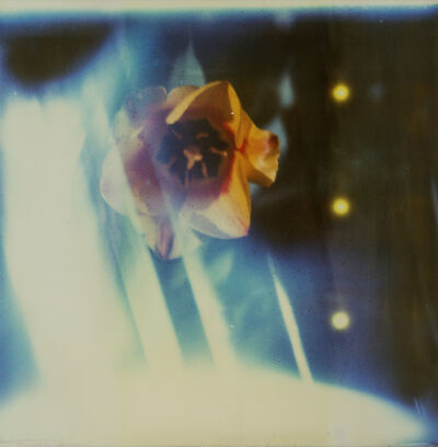 Kirsten Thys van den Audenaerde, 'Ray of Light - Contemporary, Landscape, Polaroid, Photograph, Expired, Flower, Blue', 2017