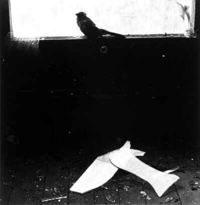 Ralph Eugene Meatyard, 'Untitled - Bird on Window Ledge', 1966