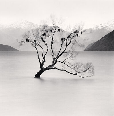 Michael Kenna, 'Wanaka Lake Tree, Study 2, Otago, New Zealand', 2013