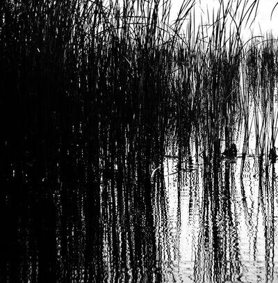 Bill Jackson, 'Wetland Silhouette', 2011