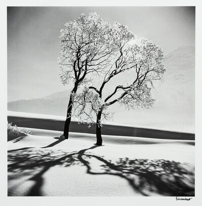 Alfred Eisenstaedt, 'Trees in Snow, St. Moritz, Switzerland', 1947