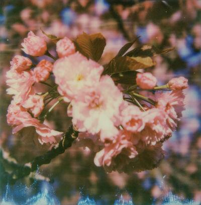Kirsten Thys van den Audenaerde, 'Burst - Contemporary, Landscape, Flower, Landscape, Polaroid, Color, Spring', 2016