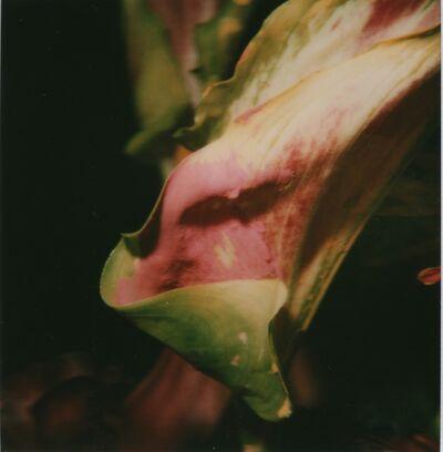 Nobuyoshi Araki, 'Flower', 2006-2009