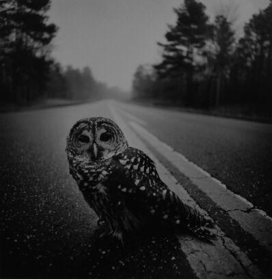 Arthur Tress, 'Owl on the road, Big Thicket, Texas', 1975