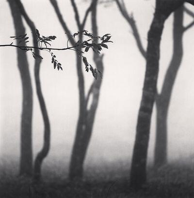 Michael Kenna, 'Chikui Cape Trees, Muroran, Hokkaido, Japan', 2002