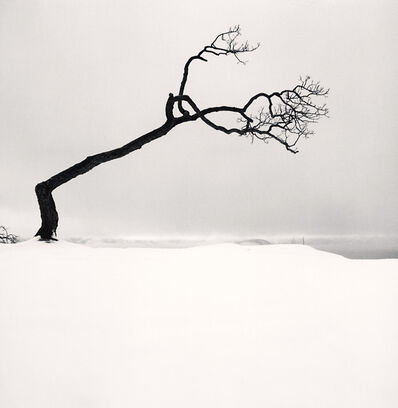 Michael Kenna, 'Kussharo Lake Tree, Study 17, Kotan, Hokkaido, Japan', 2007