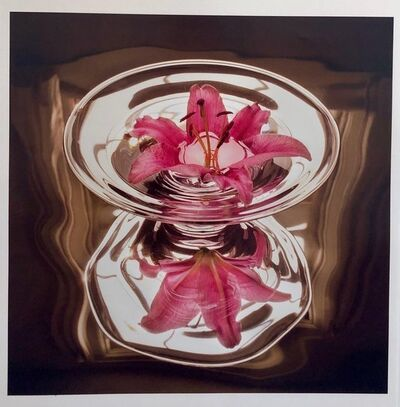 Peter C. Jones, 'Floating Lily, Large Format Photo 24X20 Color Photograph Beach House', 2000-2009