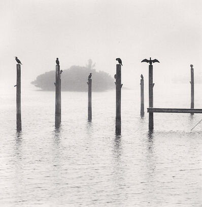 Michael Kenna, 'Seven Cormorants, Florida, USA', 2004