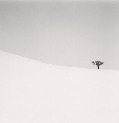 Michael Kenna, 'Single Tree, Mita, Hokkaido, Japan', 2007