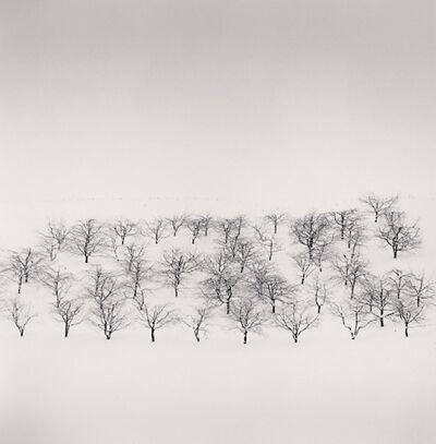 Michael Kenna, 'Sixty Trees, Nakafurano, Hokkaido, Japan', 2004