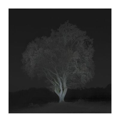 Ralf Peters, 'Winter #1', 2016