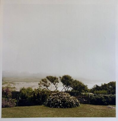 Peter C. Jones, 'Wild Roses, Large Format Photo 24X20 Color Photograph Beach House', 2000-2009