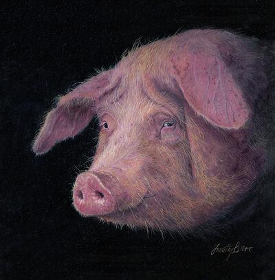 Timothy Barr, 'Piggy'
