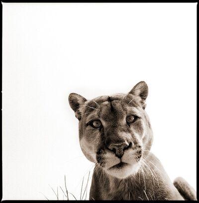 Nine Francois, 'Cougar 2', 2015