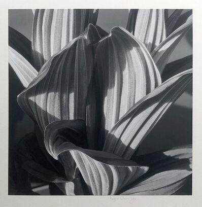 Imogen Cunningham, 'Glacial Lily (False Hellebore)', 1926