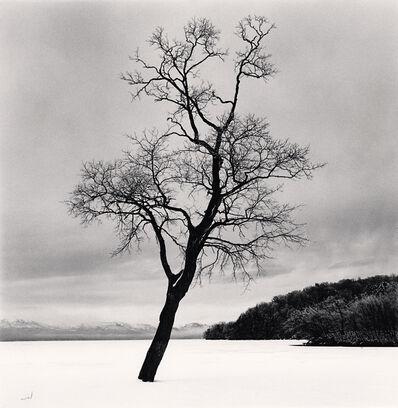 Michael Kenna, 'Amemasu Tree, Hokkaido, Japan', 2020