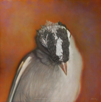 Kate Breakey, 'White-crowned Sparrow', 2007