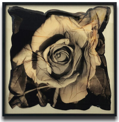 Bonny Lhotka, 'Gold Rose', 2019