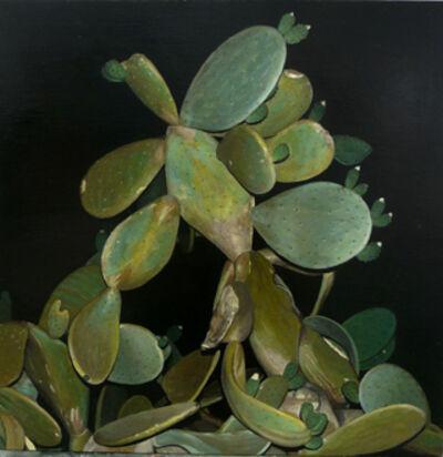 Marcos Cárdenas, 'Cactus de noche'