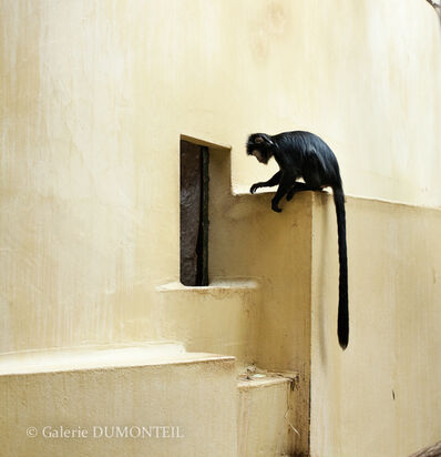 Eric Pillot, 'Monkey and Yellow Wall', 2012