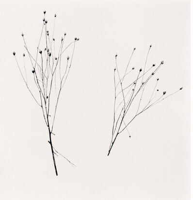 Michael Kenna, 'Two Winter Stalks, Biei, Hokkaido, Japan, 2013', 2013