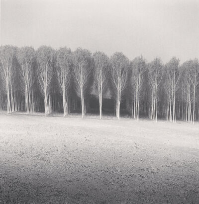 Michael Kenna, ' Forest of Poplars, Caposotto, Sermide, Mantova, Italy', 2018