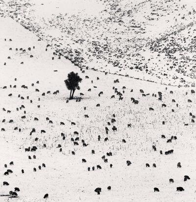 Michael Kenna, 'Two Hundred and Seven Sheep, Rakaia Valley, Canterbury, New Zealand', 2013