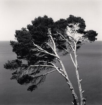 Michael Kenna, 'Two Pine Trees,  Llucalcari, Mallorca, Spain', 2017