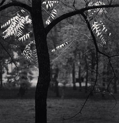Michael Kenna, 'Autumn Leaves, Luzzarra, Reggio, Emilia, Italy', 2017