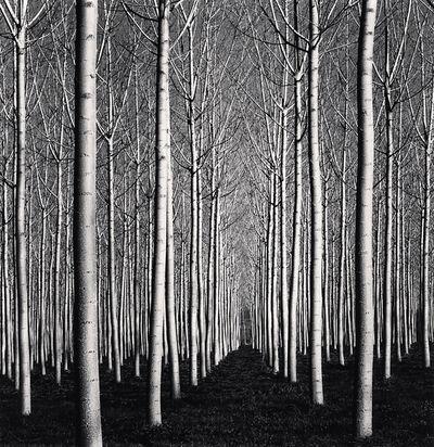 Michael Kenna, 'Spring Poplar Trees, Pavia, Italy', 2019